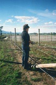 Arbeiten auf einem Weingut bei Blenheim, Neuseeland